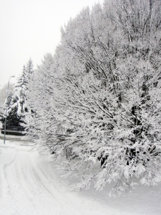 neige2010bis1